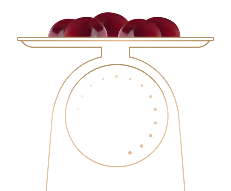http://pastry.bold-themes.com/wp-content/uploads/2017/10/illustration_landing.png